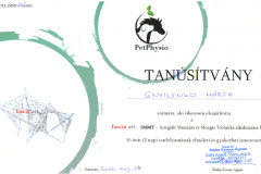 IMTT - Integrált Masszázs és Mozgás Technika alkalmazása lovakon